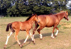 Cat Creek Rose of Grace and her filly Helicon Cordelia